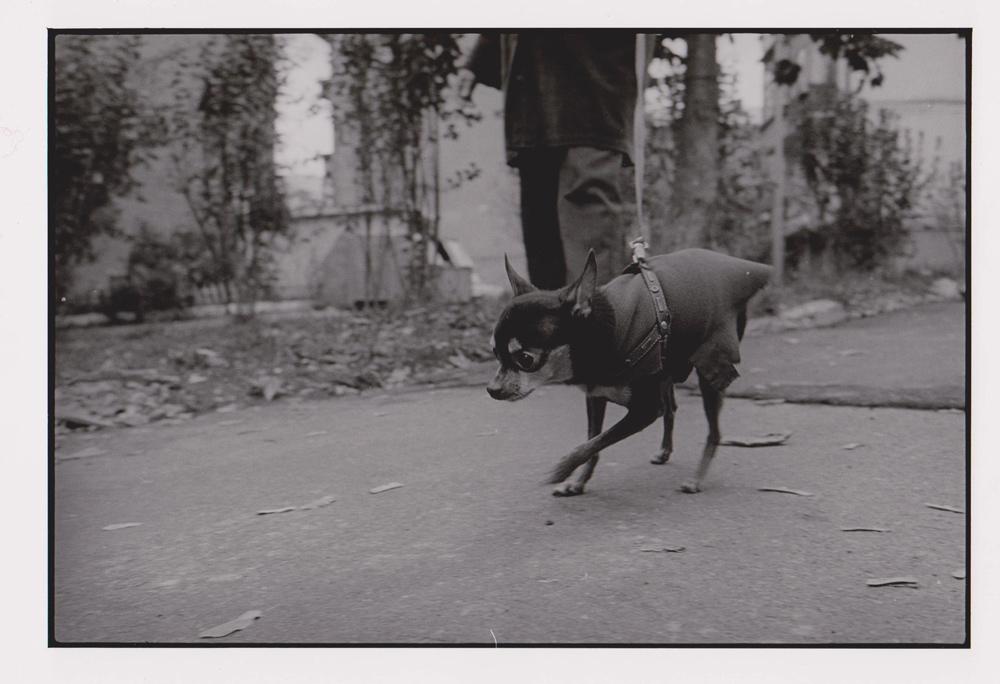 Foto aus Reisebilder, Huendchen, Lemberg, Ukraine 1999
